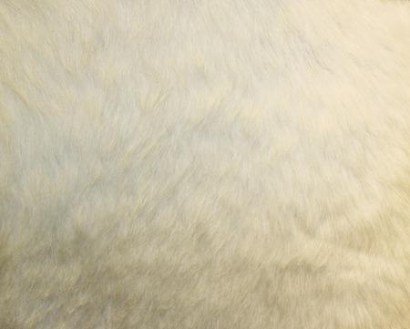 fur: cow skin texture - closeup fur fashion. Background.