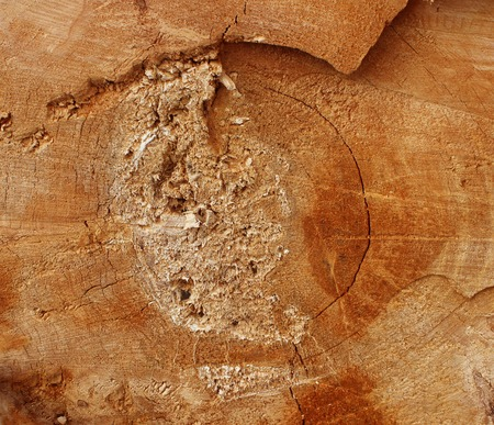 ceramica: Texture saw cut the old tree in the reconstruction of the city park Gatchina Leningrad Region, Russia.