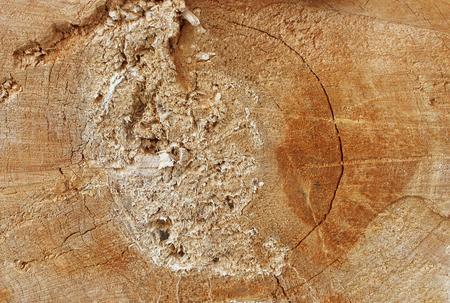 textura: Texture ha visto tagliare il vecchio albero nella ricostruzione del parco cittadino Gatchina Leningrad Region, Russia. Archivio Fotografico