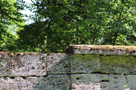 purposefulness: tree are growing in the wall near the park Sylvia, Gatchina, made of the famous pudostskogo stone, 17th century