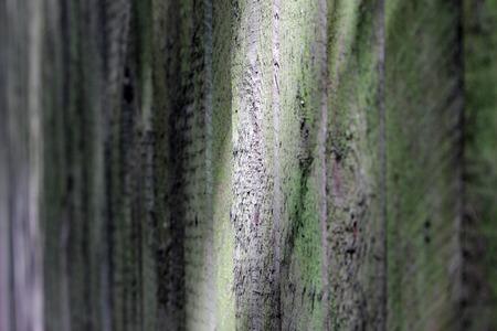 textura: trama della vecchia staccionata in legno che protegge la terra