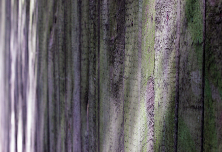protects: texture of the old wooden fence that protects the land