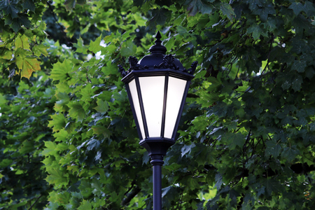 illuminating: street lamp illuminating the track in the Gatchina park