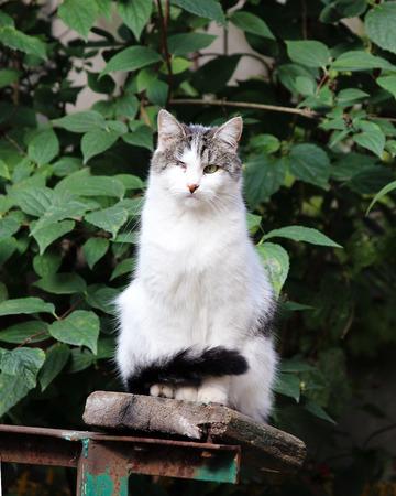 cat infected with feline herpesvirus - Feline viral rhinotracheitis or chlamydiosis - Chlamydia psittaci after losing eye