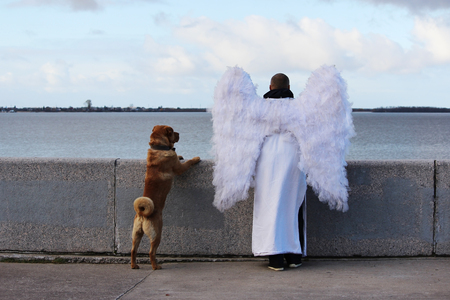 embankment: an angel and a dog are standing on river embankment and looking into the distance
