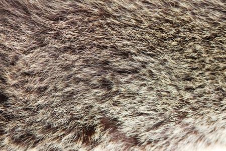 fulvous: texture brown fulvous Siberian bear Ursidae skins.