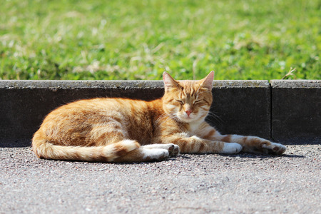 Lonely red cat warms itself in the spring sun Stock Photo