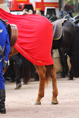 horseflesh: Croup of horses Equus caballus, covered with a red cloak on a performance at City Day Gatchina Leningrad Region, Russia.