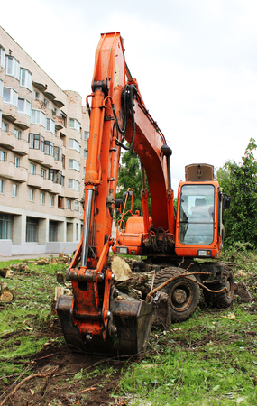 sawn: Mass cutting of adult poplars in the city. The excavator with bucket moves the wooden pieces.