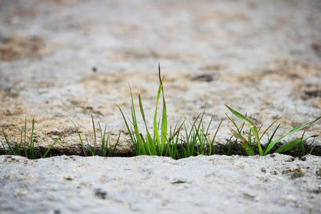 A small green blade of grass sprouts between two grey stone slabs in the open air. Concept of perseverance and lust for life.