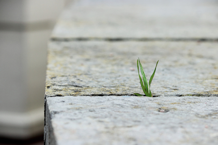 lust for life: A small green blade of grass sprouts between two grey stone slabs in the open air. Concept of perseverance and lust for life.