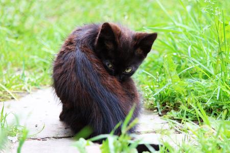 Black kitten are washing on green grass. Stock Photo