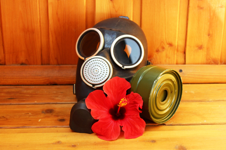 gasmask: black old gas mask and red flower hibiscus on a wooden background.