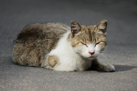 A homeless cat with frostbitten ears sits on the street in the summer
