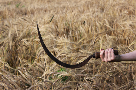 Old rusty sickle in a girls hand against the background of a field with ripe wheat in late August