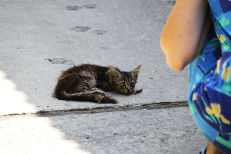 the girl crouched next to the exhausted homeless kitten on the street. Stock fotó