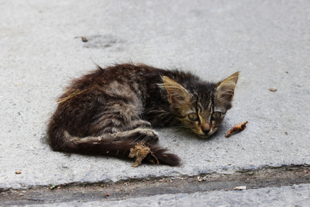 alone homeless, exhausted kitten on the street.