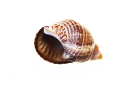 isolated macro of a small shell from a snail on a white background Stock Photo