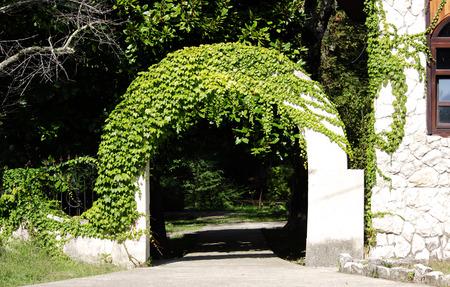 white round arch in the open air, half overgrown with a decorative ivy. Krasnodar region
