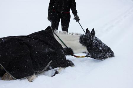 森の中を歩きながら、冬の新鮮な空気の中でピエバルドのマーレ。雪の中で入浴する。仕事がまだ始まっていないことを体現することわざのデモン