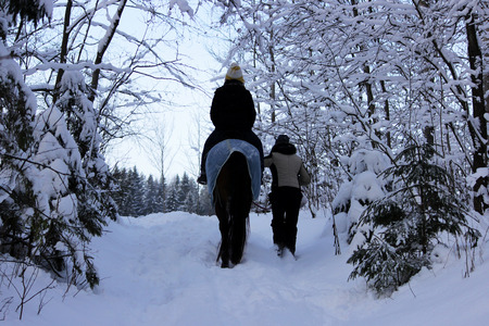 horseback ride on a horse in the winter forest with an escort. the horse is dressed in a blanket.