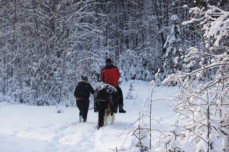 Balade à cheval sur un cheval dans la forêt d'hiver avec une escorte. le cheval est vêtu d'une couverture. Banque d'images - 95404311