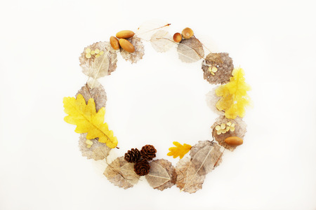 round frame of skeletonized aspen leaves, ficus and oak, cones and acorns on a white background Фото со стока - 97594270