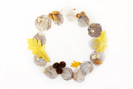 round frame of skeletonized aspen leaves, ficus and oak, cones and acorns on a white background