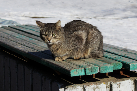 A cat with a gray cane color sits on a green bench, basking in the spring sun