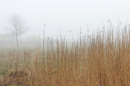 thickets of grass in the fog in a vacant lot in the spring early in the morning. 版權商用圖片