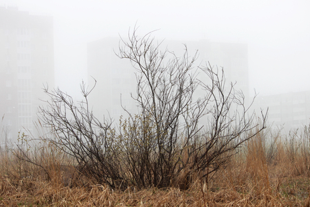 a lonely little bush and houses in the fog in a vacant lot in the spring early in the morning. 版權商用圖片