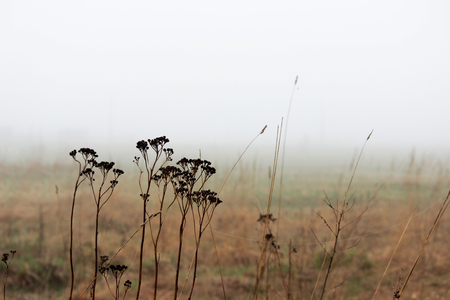 thickets of grass in the fog in a vacant lot in the spring early in the morning