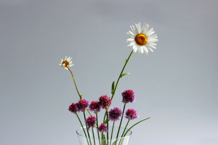 A few twigs of wild chives onion Allium schoenoprasum and chamomile in a glass vase on a gray background