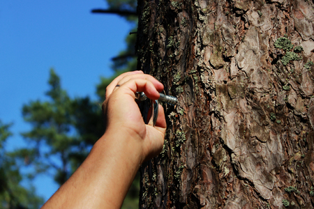 a man fastens a ring to the pine for fixing a person and flogging. concept of sadomasochism, reportage photography