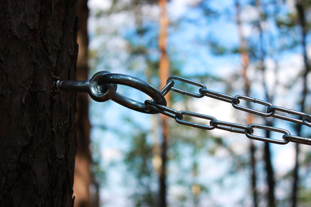 chain and ring to the pine for fixing a person and flogging. concept of sadomasochism, reportage photography Stock Photo