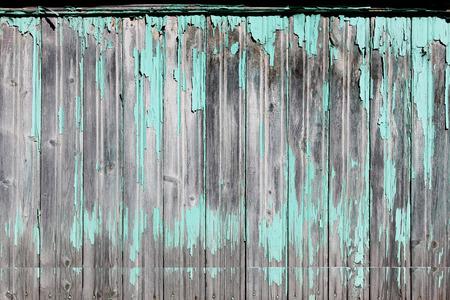 Vintage wood background with peeling turquoise old flaky paint.