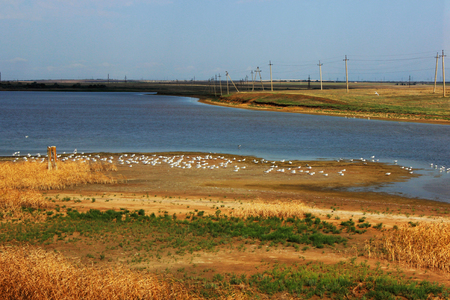 early morning, many sea gulls, an isthmus. Photo from the Crimean bridge