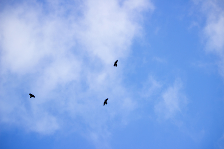 Light white cirrus clouds covering the large surface of the sky and three birds Stock Photo