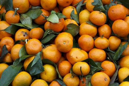 Tangerines oranges, mandarins, clementines, citrus fruits with leaves, poured into a box in a box on the grocery market. Leningrad region. Stock Photo