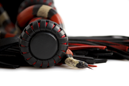 Red-black floger with a patterned handle and leather tails and young Scarlet kingsnake Lampropeltis elapsoides on white background. Nonpoisonous snake with a three colored, which characterizes mimicry. Concept of pleasure from pain