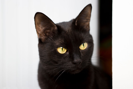 Closeup portrait of a Halloween young black cat on a white background which peeks out onto the balcony. Stock Photo