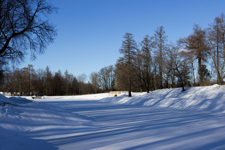 winter and trees on the shore of the White Lake, Gatchina Park.