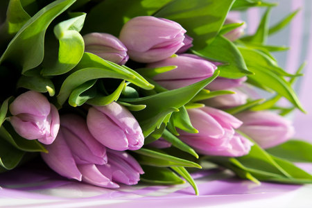 Beautiful bouquet of many small lavender tulips Tulipa for celebration.