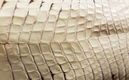 cub Nile crocodile Crocodylus niloticus. The texture beige plates of scaly skin on the stomach. 版權商用圖片 - 122023223
