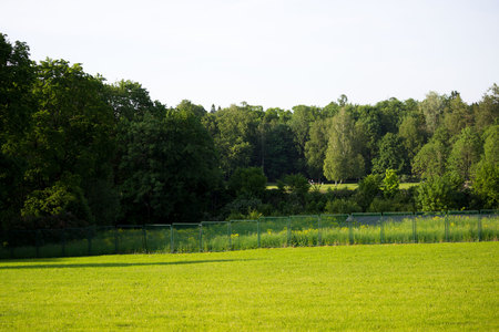 Smooth green meadow in Gatchina Park, Russia. Summer. Stok Fotoğraf