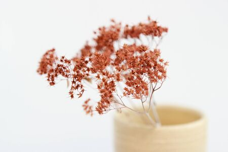 beige vase with dried plants on a white background. minimalism style. interior decoration Banque d'images