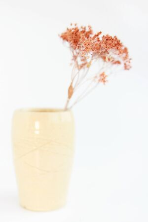 beige vase with dried plants on a white background. minimalism style. interior decoration Stok Fotoğraf