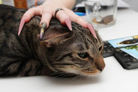 girl s hand with long nails and manicure lies on the head of a cat from a cat's shelter. reportage Banque d'images - 144376567