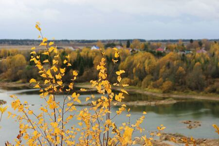 bird's eye view of the lake and autumn forest. yellow birches in the foreground