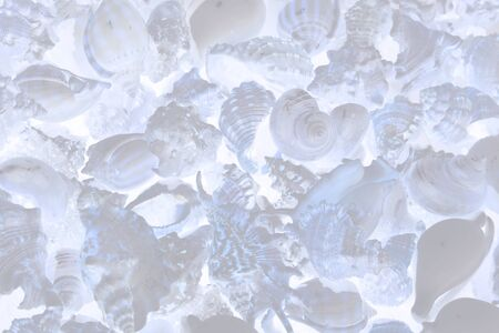 Seashells background. various empty shells of marine crustaceans in a tourist stall. computer processing. translucent filter.